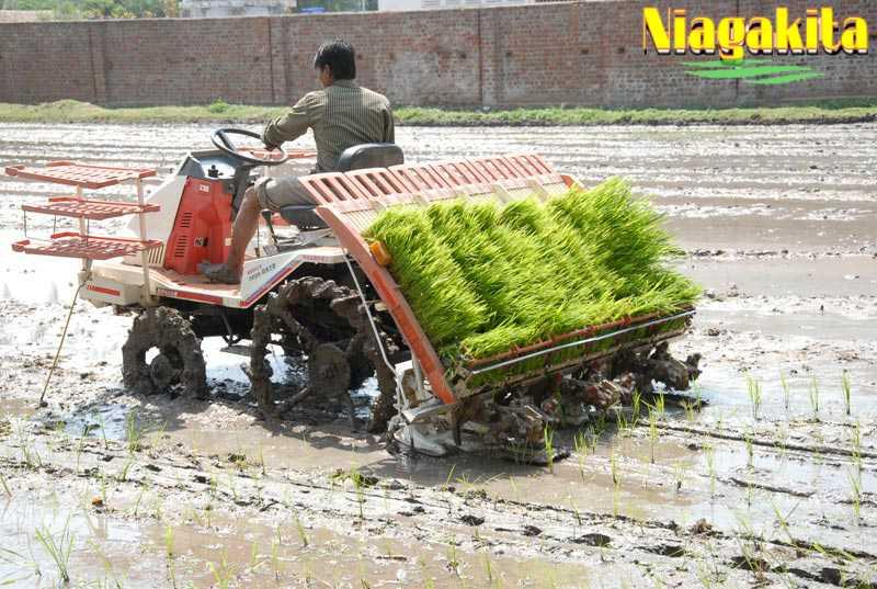 Transplanter teknologi pertanian